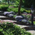 Stenen trapje in tuin